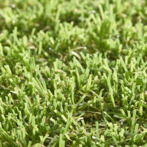 Lavish Lawns Elegance
